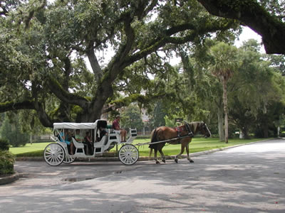 Jekyll Island Horse Drawn Carriage Tours