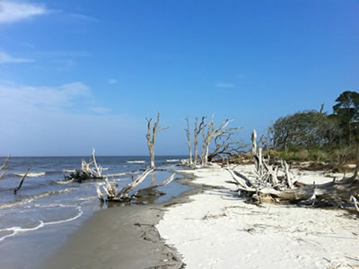 Jekyll Island Beaches Driftwood Beach Glory Beach Great Dunes